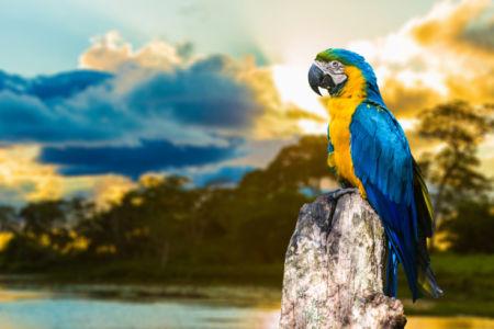 Фотообои попугаи ара закат (animals-0000497)