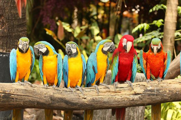 Фотообои Стая попугаев (animals-533)