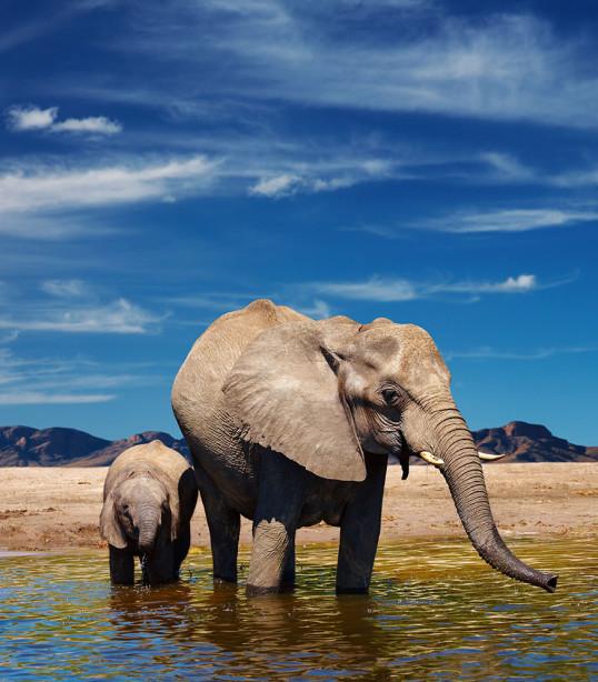 Фотообои Мама и слоненок (animals-556)