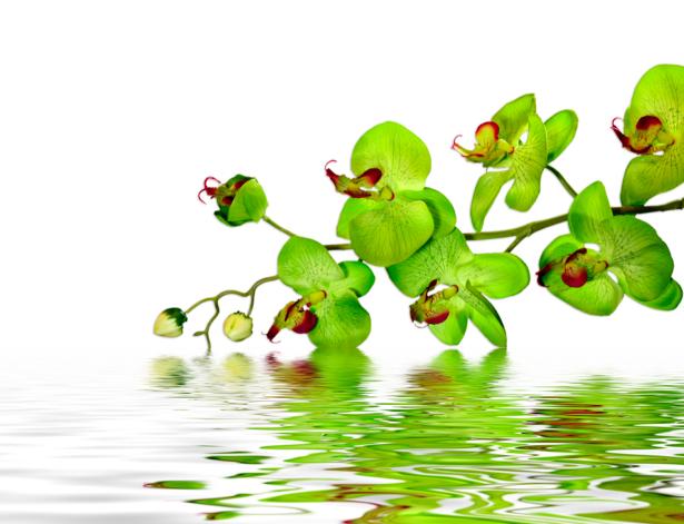 Ветка зеленой орхидеи над водой фотообои цветов (flowers-0000281)