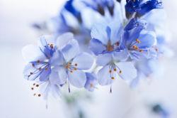 flowers-0000327