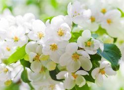 flowers-0000519