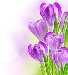 flowers-0000647