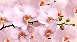 flowers-784
