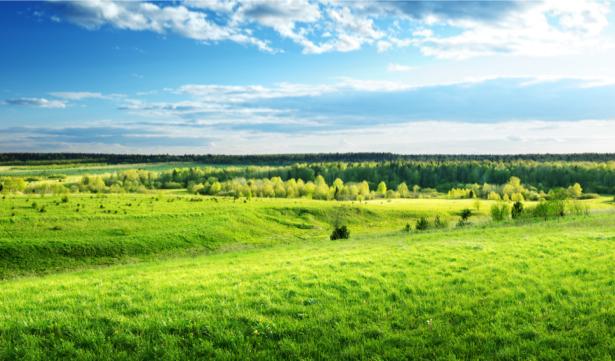 Фотообои трава, небо голубое (nature-0000645)