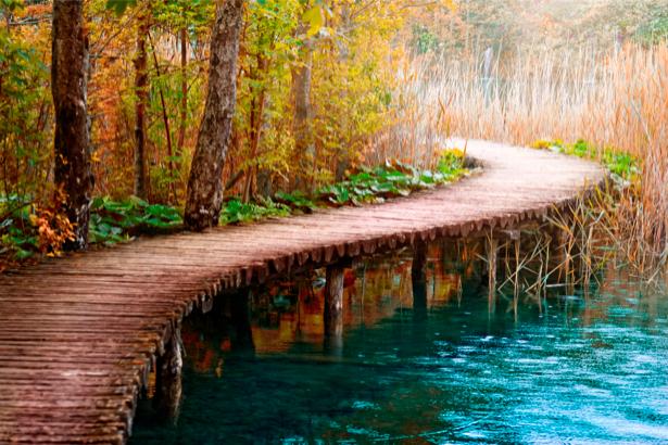 Фотообои с природой мост на реке лес (nature-00110)