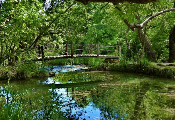Фотообои с природой мост через реку (nature-00111)