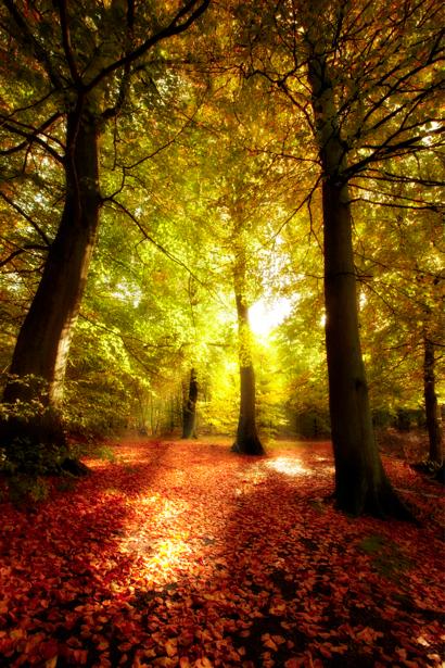 Фотообои с природой лес солнце (nature-00122)