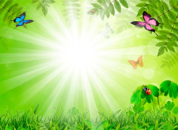 Фотообои бабочки трава (nature-00160)