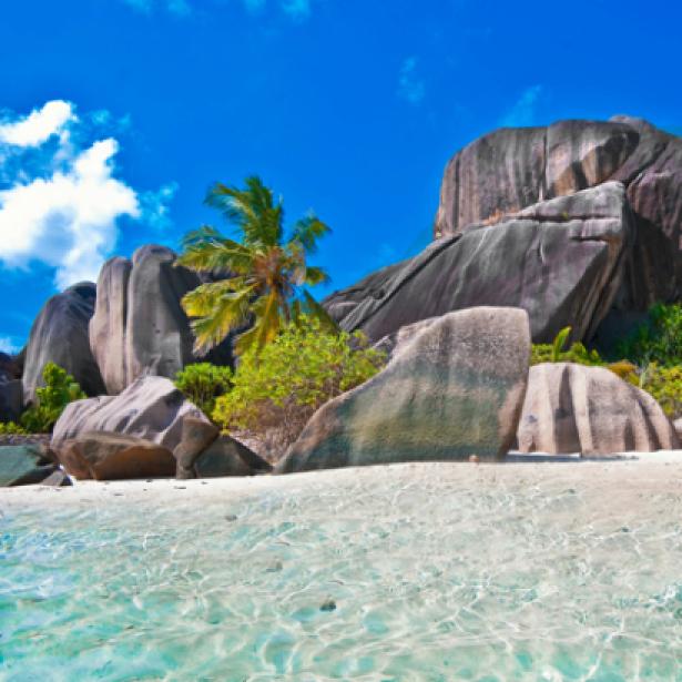 Фотообои скалистый берег с пальмой (sea-0000128)