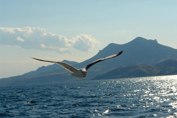Фотообои море чайка (sea-0000163)