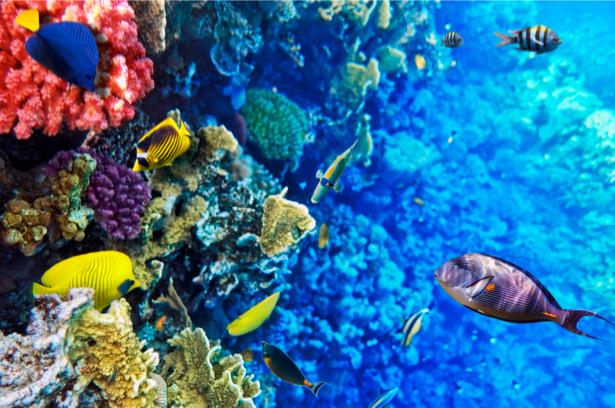 Фотообои ванная коралловый риф (underwater-world-00026)