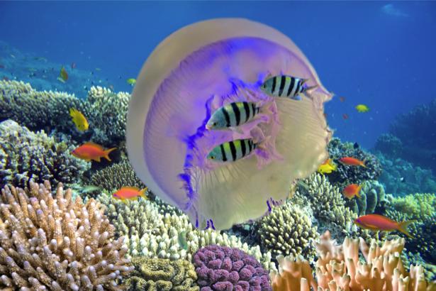 Фотообои в ванную кораллы медуза (underwater-world-00136)