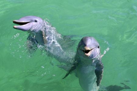 Фотообои дельфины фото (animals-0000299)