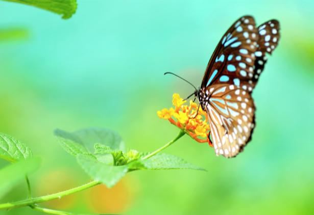 Фотообои Бабочка на цветке (animals-0000446)