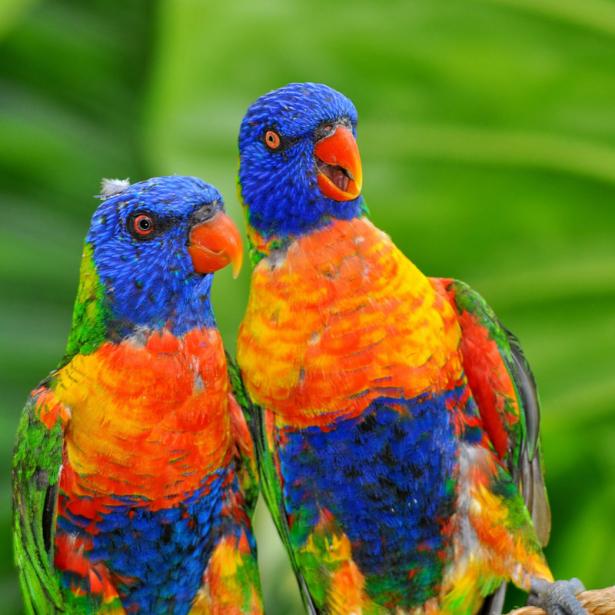 Фотообои яркие попугай (animals-0000495)