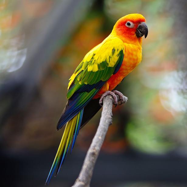 Фотообои Попугай на ветке (animals-536)