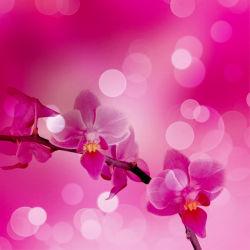 flowers-0000038