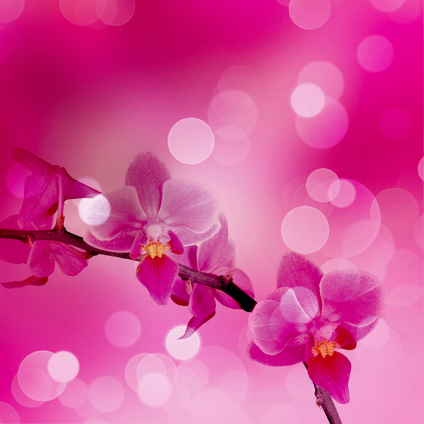 Фотообои на стену цветы Розовая орхидея (flowers-0000038)