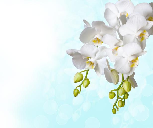 Белая орхидея фотообои цветов на стену (flowers-0000053)