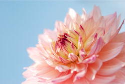 flowers-0000212