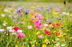 flowers-0000268