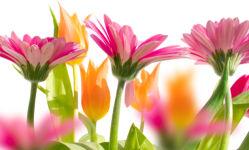 flowers-0000274