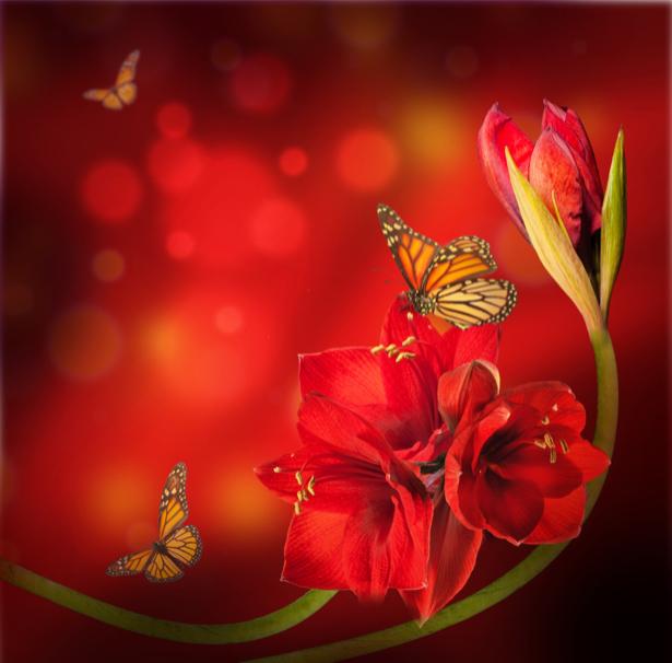 Красные цветы и бабочки - Фото обои на стену (flowers-0000393)