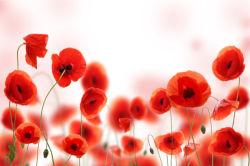 flowers-0000463