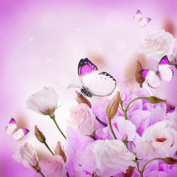 Обои на стену белые цветы, бабочки (flowers-0000577)