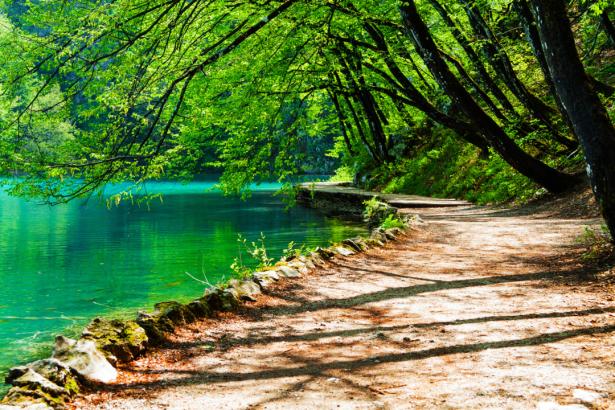 Фотообои озеро дорожка лес (nature-0000789)