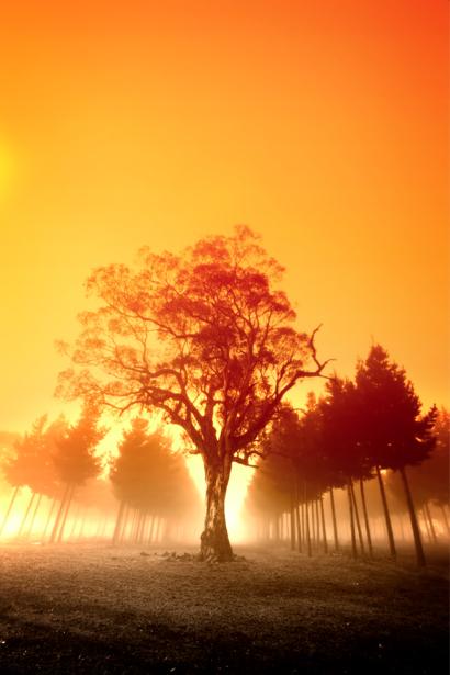 Фотообои лес закат пейзаж (nature-00199)