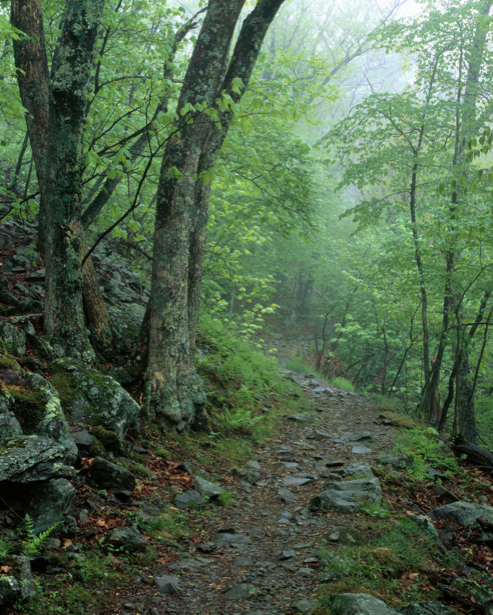Фотообои дорога в лес (nature-00222)