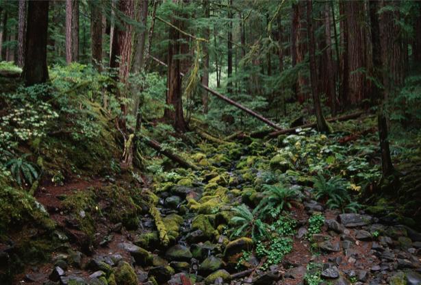 Фотообои Лесная чаща (nature-00275)
