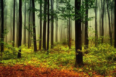 Фотообои Осень в лесу (nature-878)