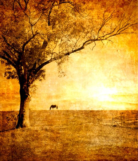 Фотообои стиль живописи дерево (retro-vintage-0000106)