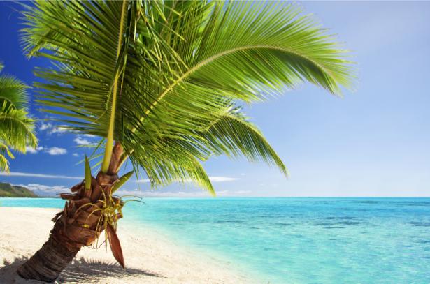 Фотообои пальма на берегу острова (sea-0000306)