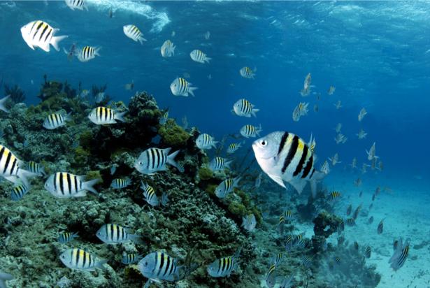 Фотообои кораллы полосатые рыбки (underwater-world-00046)