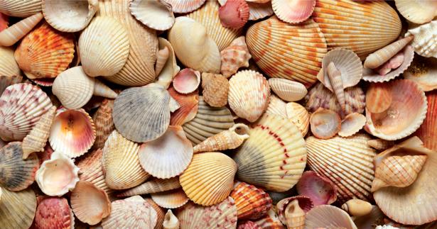 Морские ракушки - Фотообои для ванны (underwater-world-00083)