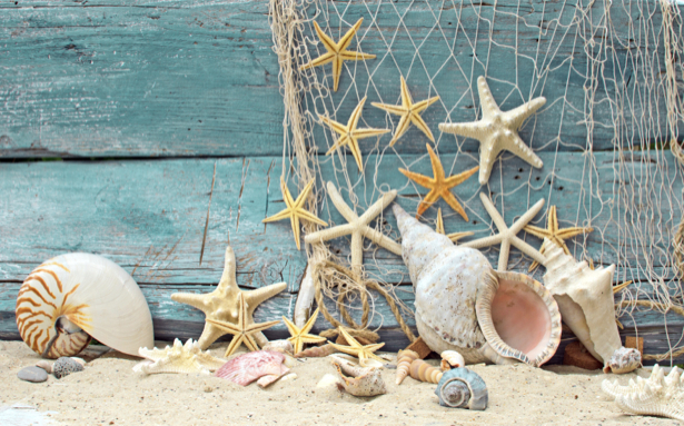 Фотообои красивые морские ракушки (underwater-world-00123)