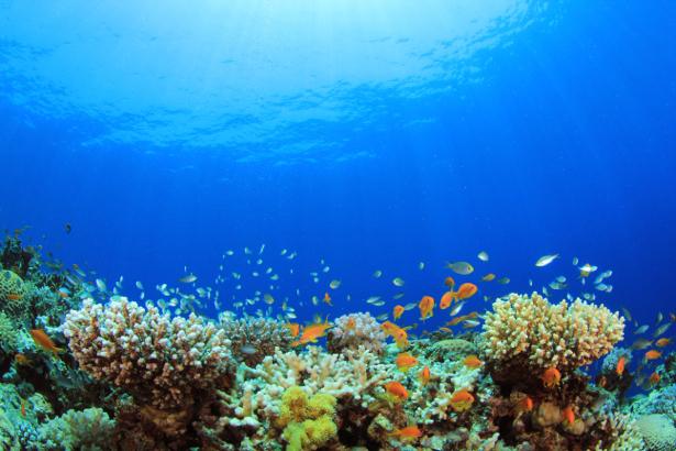 Фотообои для ванны кораллы, рыбки (underwater-world-00171)