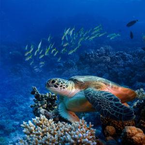 Фотообои для ванны морская черепаха (underwater-world-00207)