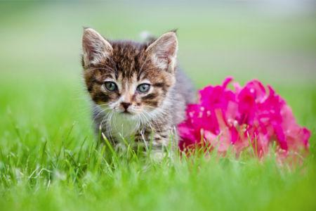 Фотообои Котик и цветок (animals-0000441)