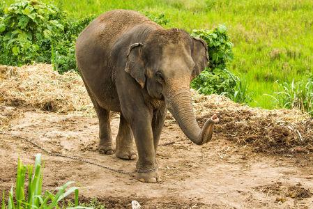 Фотообои Слоненок (animals-538)
