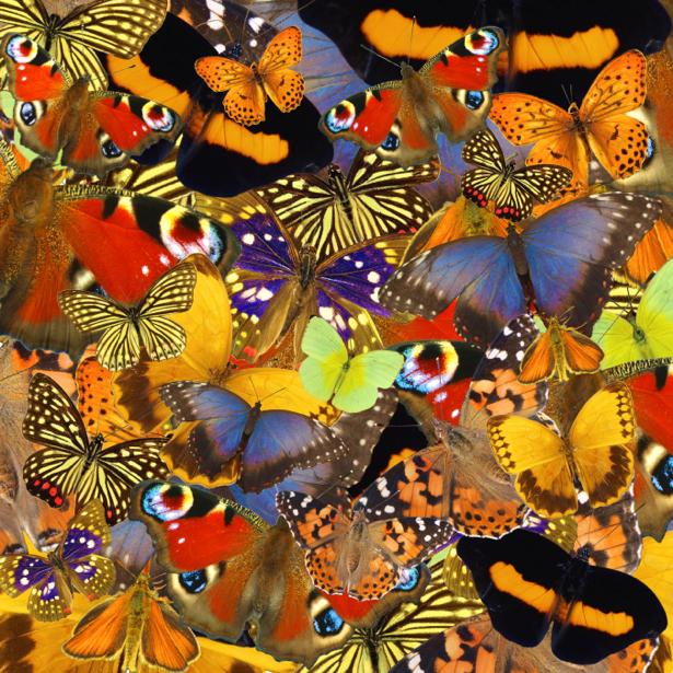 Фотообои разноцветные бабочки (background-0000107)