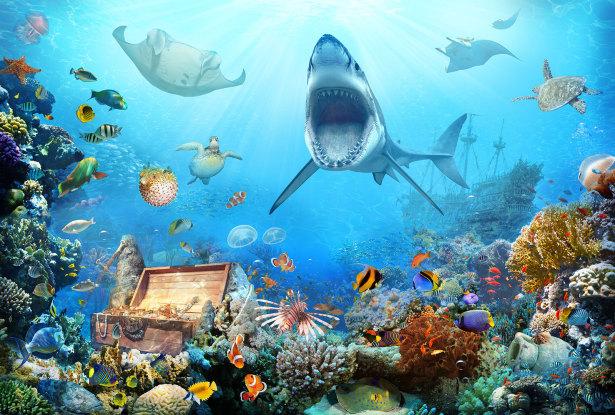 Фотообои Акула и сокровища (children-0000408)