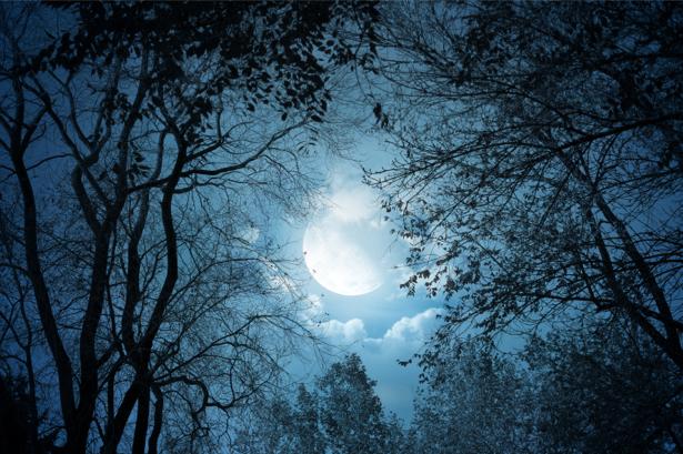 Фотообои лес в свете луны (fantasy-0000031)