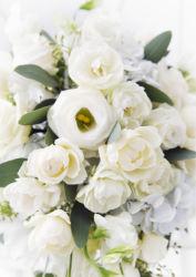 flowers-0000100