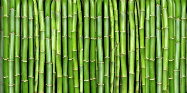 Фотообои стена из бамбука (flowers-0000113)