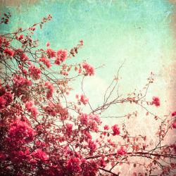 flowers-0000144